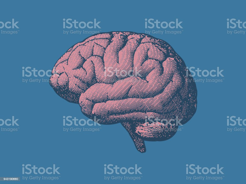 Vintage brain illustration in side view on blue BG royalty-free vintage brain illustration in side view on blue bg stock illustration - download image now