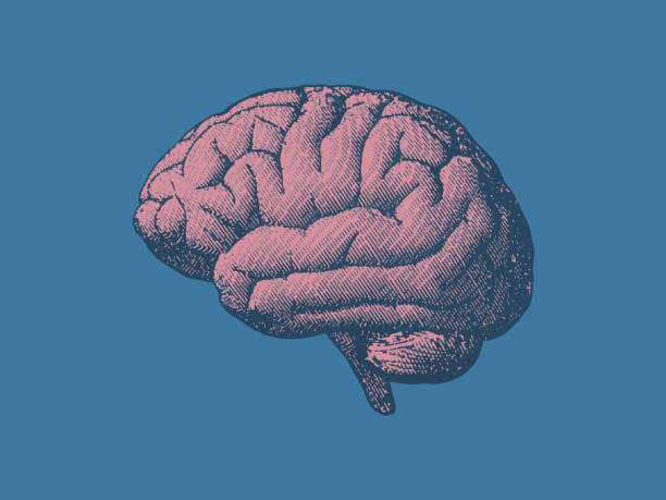 Vintage brain illustration in side view on blue BG vector art illustration