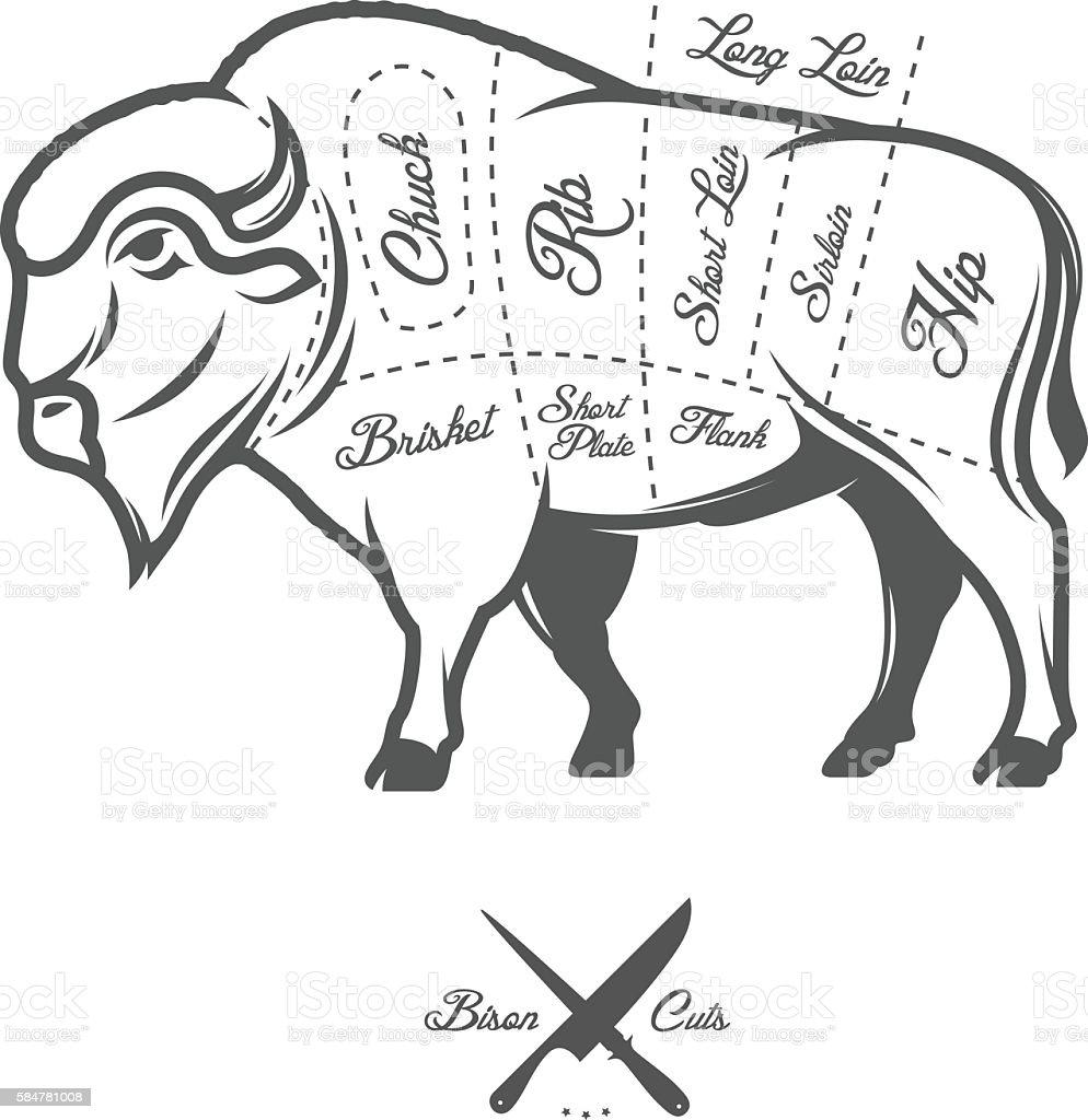 Bison Anatomy Diagram - Explore Schematic Wiring Diagram •