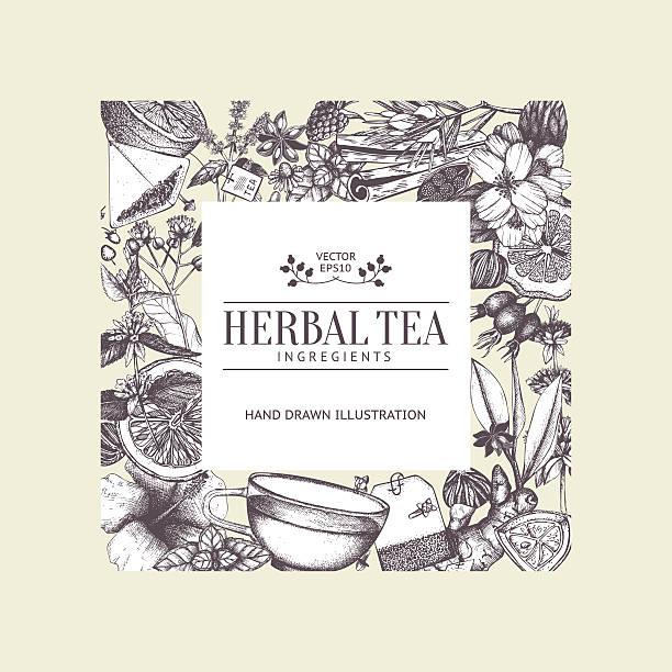 illustrazioni stock, clip art, cartoni animati e icone di tendenza di design vintage carta con tè di schizzo disegnato a mano libera. - camellia sinensis