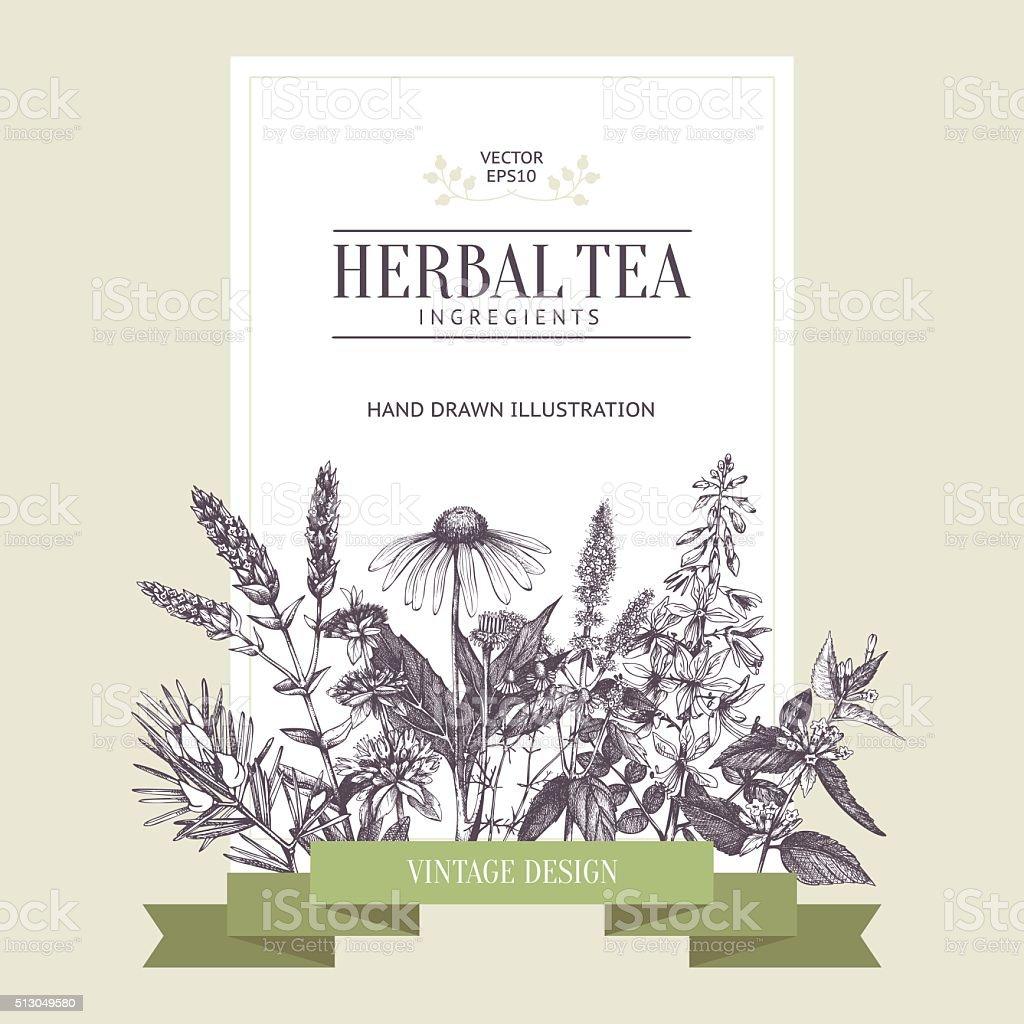 Vintage card design with herbal tea sketch collection. vector art illustration
