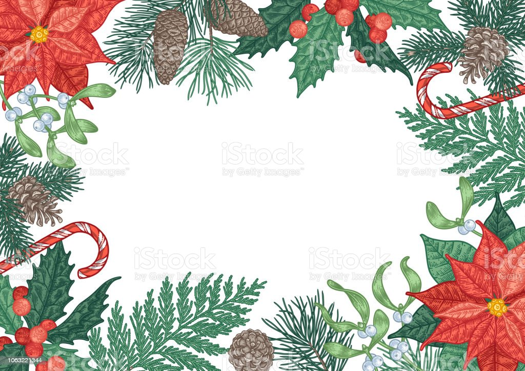 Vintage Christmas.Vintage Christmas Background With Winter Plants And Berries Stock Illustration Download Image Now