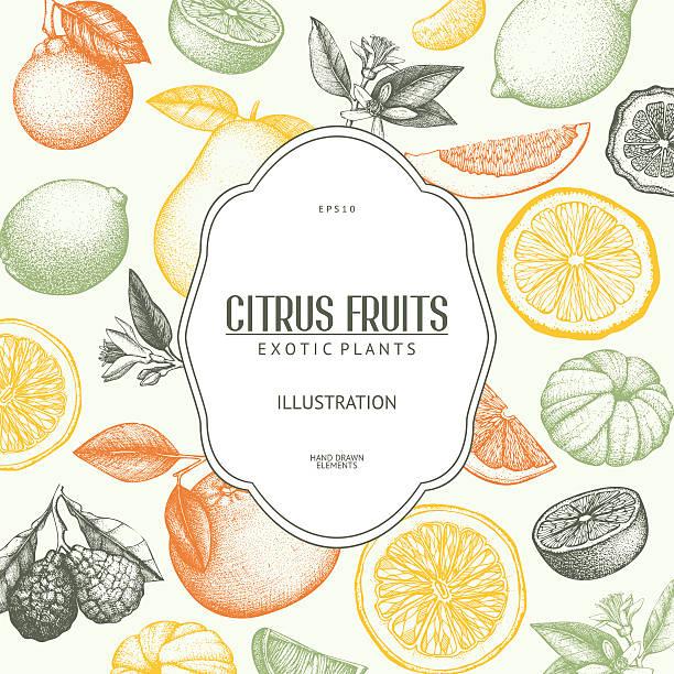 illustrations, cliparts, dessins animés et icônes de citrus vintage fond dans des tons pastel - infusion pamplemousse