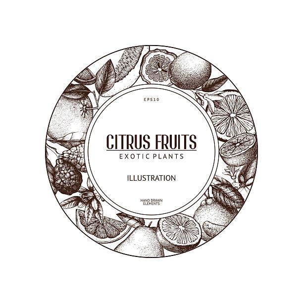 illustrations, cliparts, dessins animés et icônes de citrus vintage fond isolé sur blanc - infusion pamplemousse