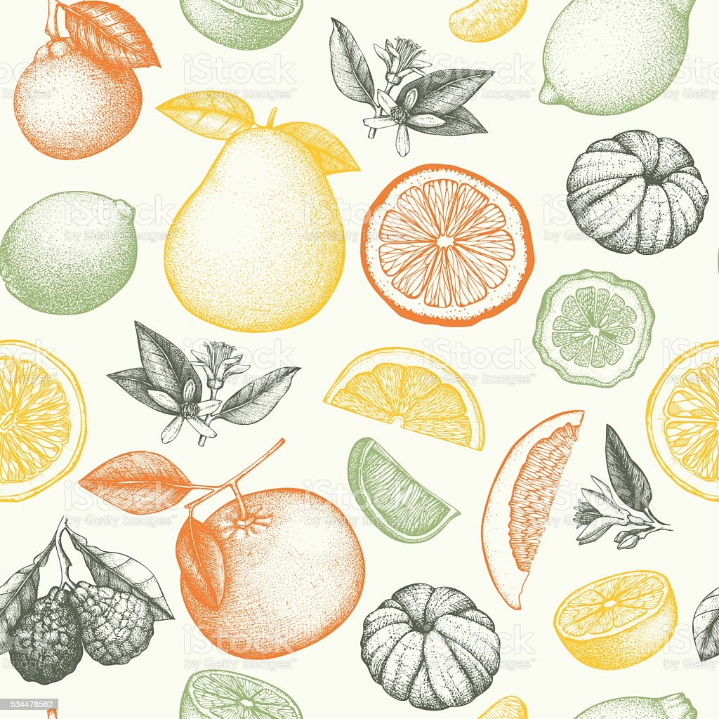 Vintage citrus background vector art illustration