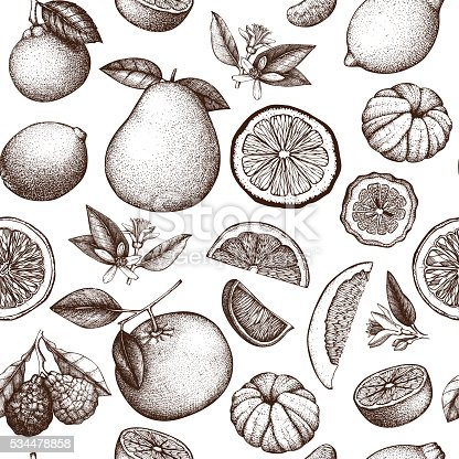 Vector seamless pattern with ink hand drawn citrus fruit, flowers, slice and leaves sketch.