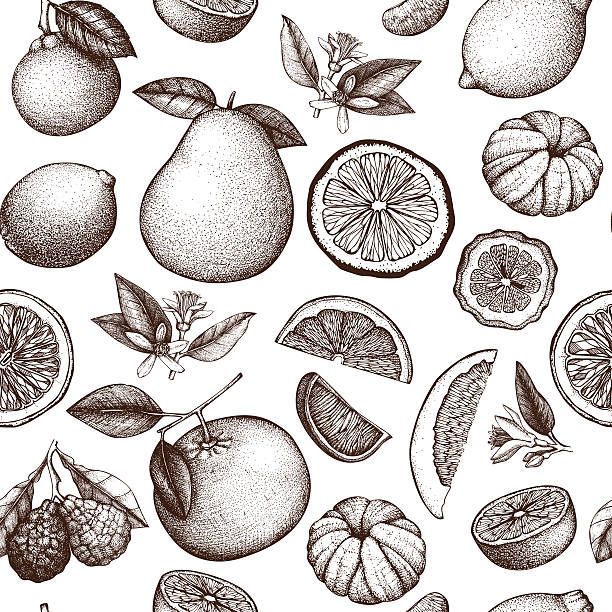 Vintage citrus background vector art illustration