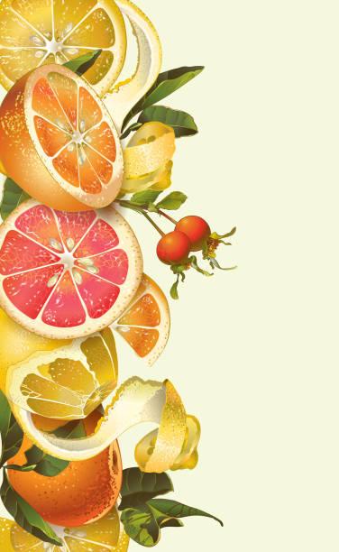 illustrations, cliparts, dessins animés et icônes de bannière agrume vintage - infusion pamplemousse