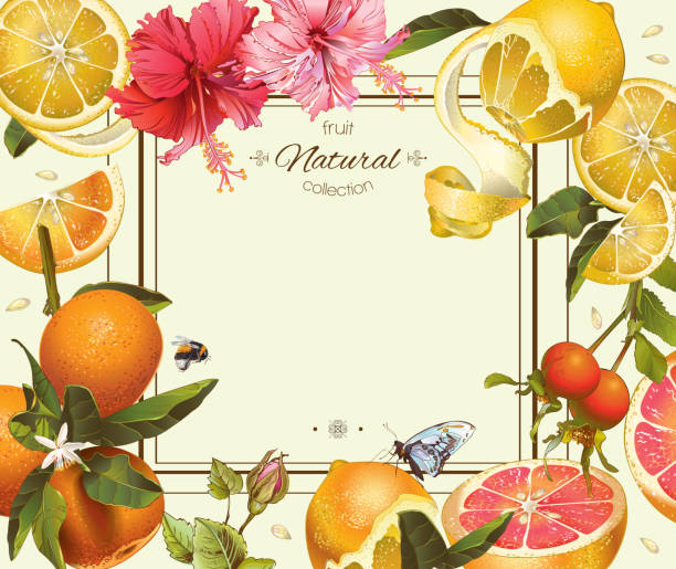 Vintage citrus frame Vector vintage citrus frame with lemon, hibiscus and rose hip.Design for tea, juice, natural cosmetics, baking,candy and sweets with citrus filling,grocery,health care products. With place for text. bee borders stock illustrations