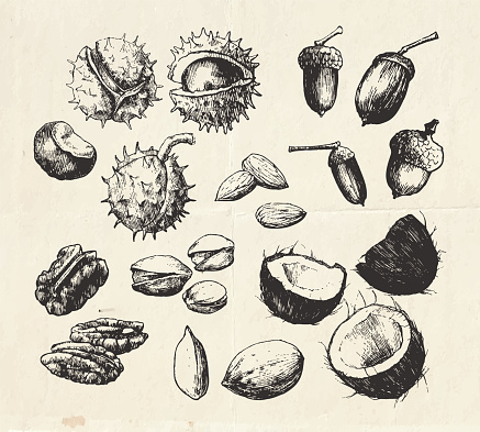 Vintage collection of hand drawn nuts
