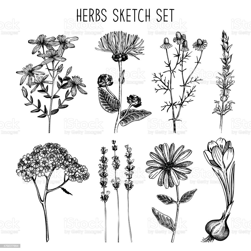 Vintage collection of herbal flowers illustration. vector art illustration