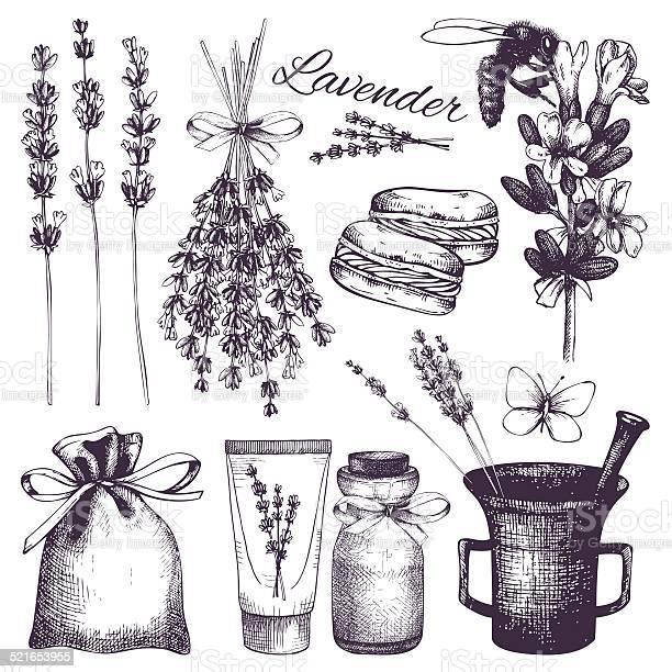 Vintage collection of lilac lavender flowers sketch vector id521653955?b=1&k=6&m=521653955&s=612x612&h=gai9gjxhvnqi63vkcvloplmxi7 jnpjpu0dpmgpi0lw=