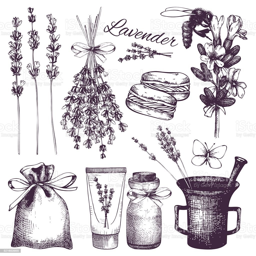 Vintage collection of lilac lavender flowers sketch vector art illustration
