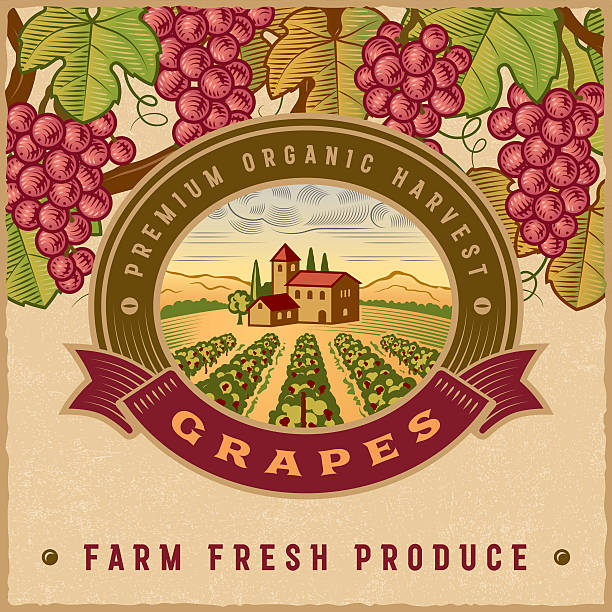 vintage colorful grapes harvest label - toskana stock-grafiken, -clipart, -cartoons und -symbole