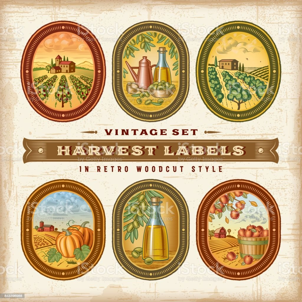 Vintage Colorful Harvest Labels Set vector art illustration