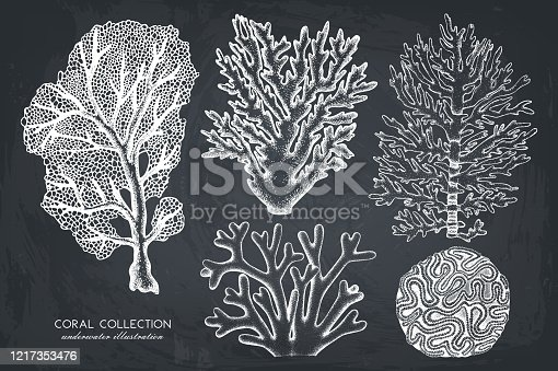 istock Vintage coral illustrations collection 1217353476