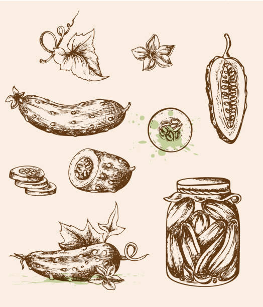 Vintage cucumbers Set of vector vintage hand drawn cucumbers. EPS 10 file, contains transparencies. pickle slice stock illustrations