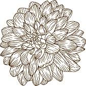 istock Vintage Dahlia Flower Engraving Line Art 544976464