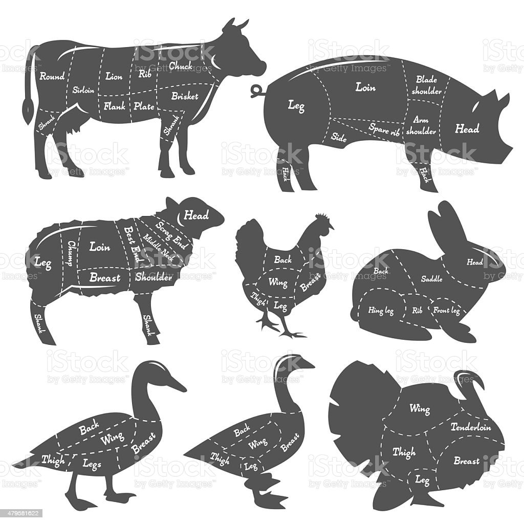 Ilustración de Vintage Diagrama Comida Corte De Animales Domésticos ...