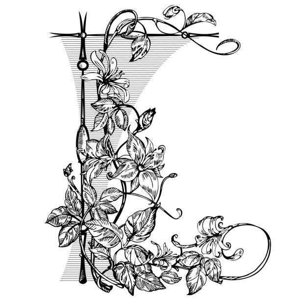 Vintage elegant flowers. Black and white vector illustration. Ho Vintage elegant flowers. Black and white vector illustration. Honeysuckle flower. Botany. Vector honeysuckle stock illustrations