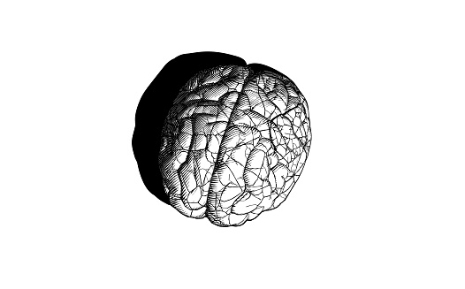 Vintage engraving brain cracking illustration isolated on white BG