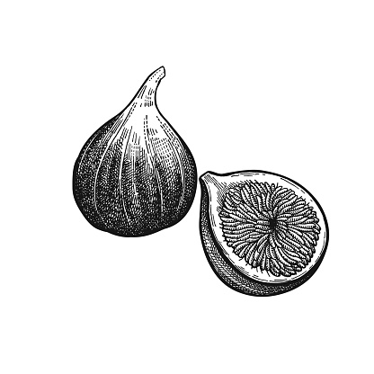 Vintage engraving figs.