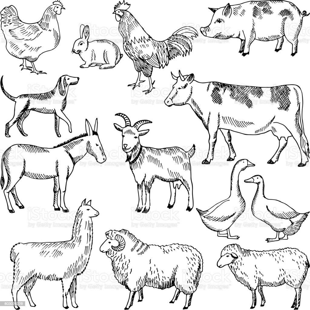 Vintage farm animals. Farming illustration in hand drawn style vector art illustration