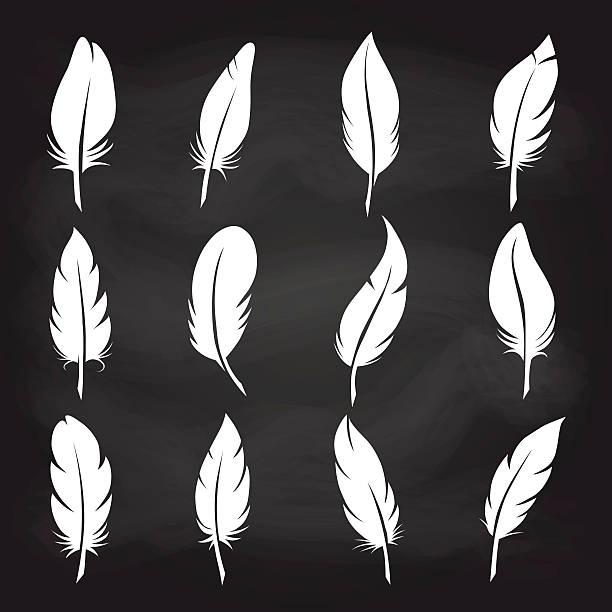 Vintage feather set on chalkboard White feather on chalkboard background vector icons. Vintage feather set bristle animal part stock illustrations