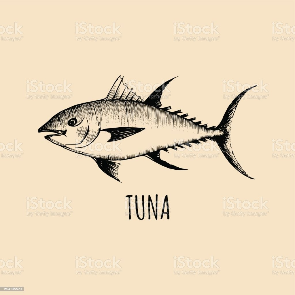 Vintage fish illustration in engraving style. Vector hand sketched tuna for logotype, label etc vector art illustration