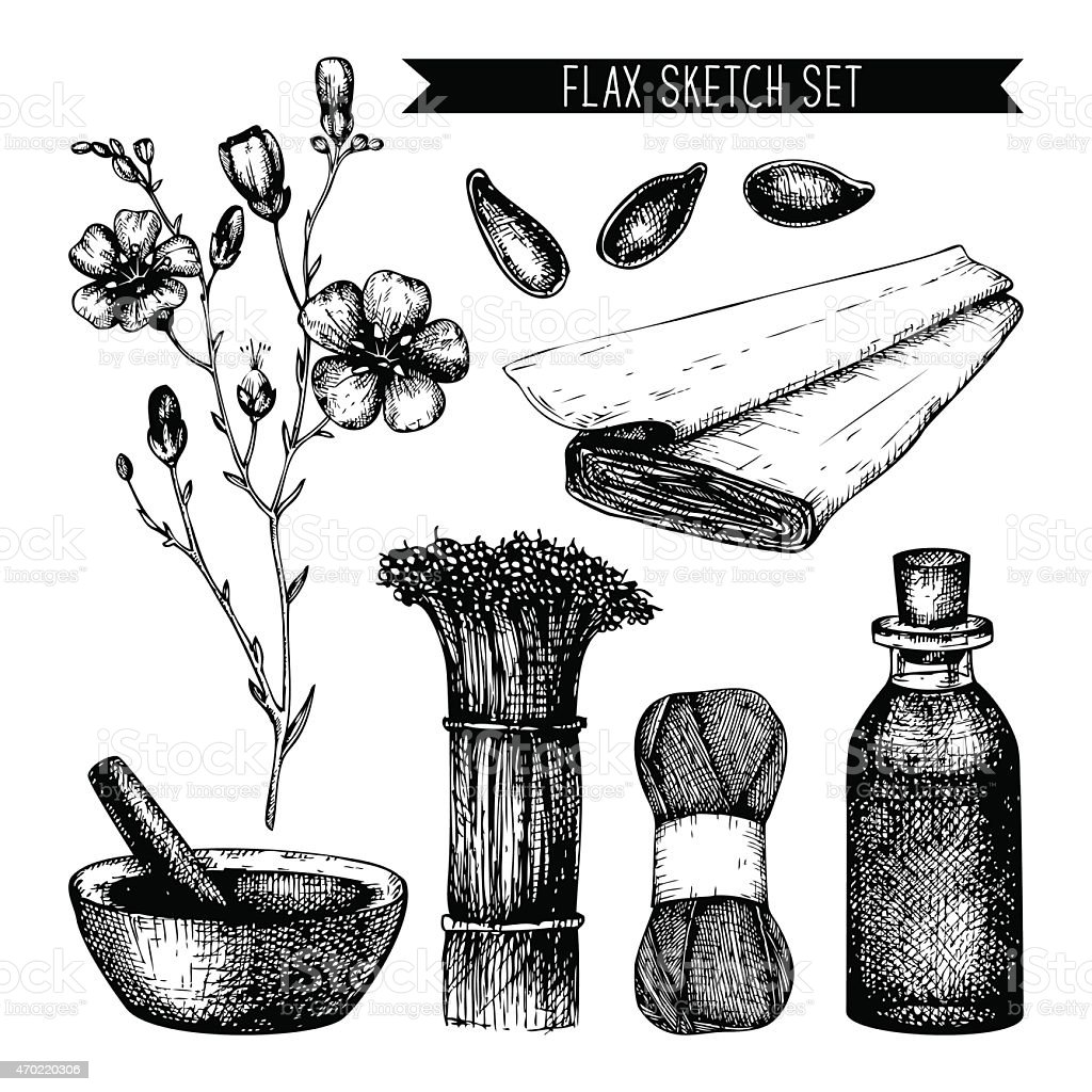 Vintage flax sketch vector art illustration