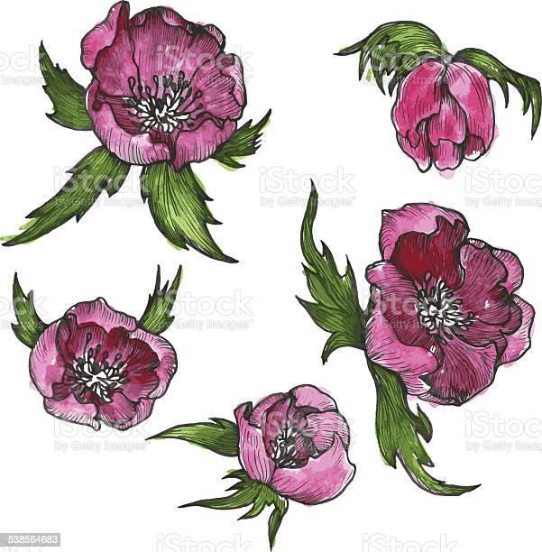 Vintage floral design elements vector id538564683?b=1&k=6&m=538564683&s=612x612&h=7ptv8udq84w3ckqlcnm ffurgdgvwybwabpf1x yngq=