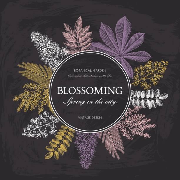 vintage floral vorlage an tafel - robinie stock-grafiken, -clipart, -cartoons und -symbole