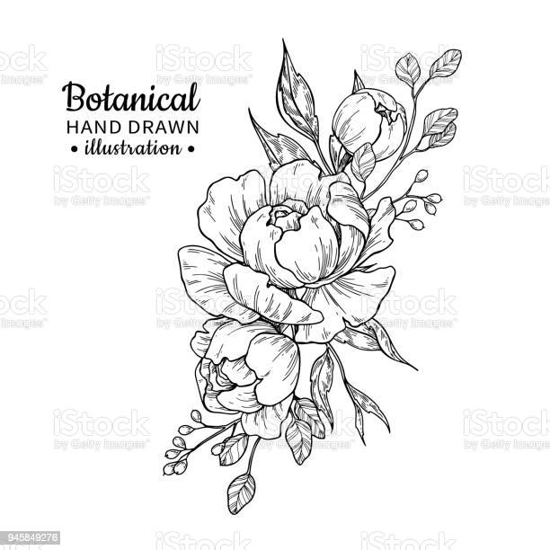 Vintage flower bouquet vector drawing peony rose leaves and berry vector id945849276?b=1&k=6&m=945849276&s=612x612&h=i1fju4dtpx8 sy3olqzvv9b16jc7ttu d8toapxlxd4=