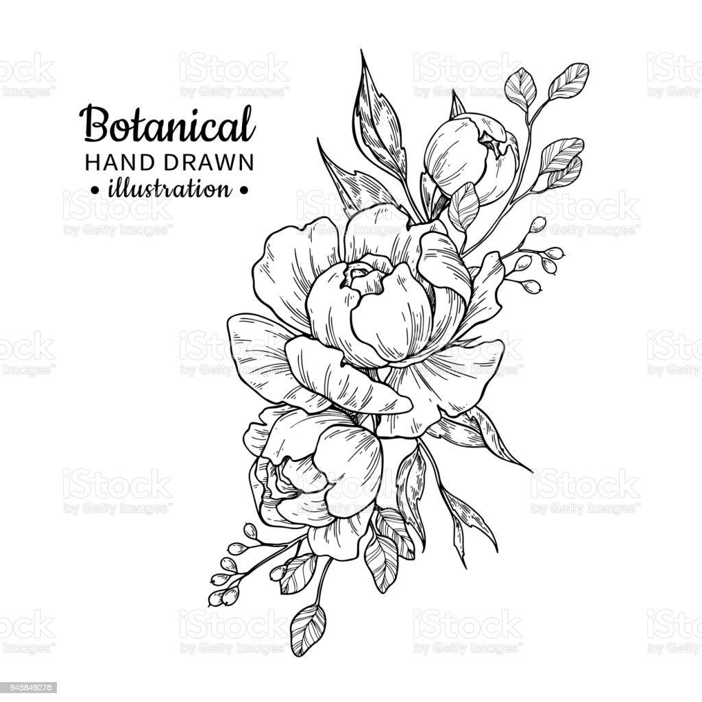 Ramo de flores vintage. Dibujo vectorial. Peonía, rosa, hojas y bayas bosquejo. - ilustración de arte vectorial