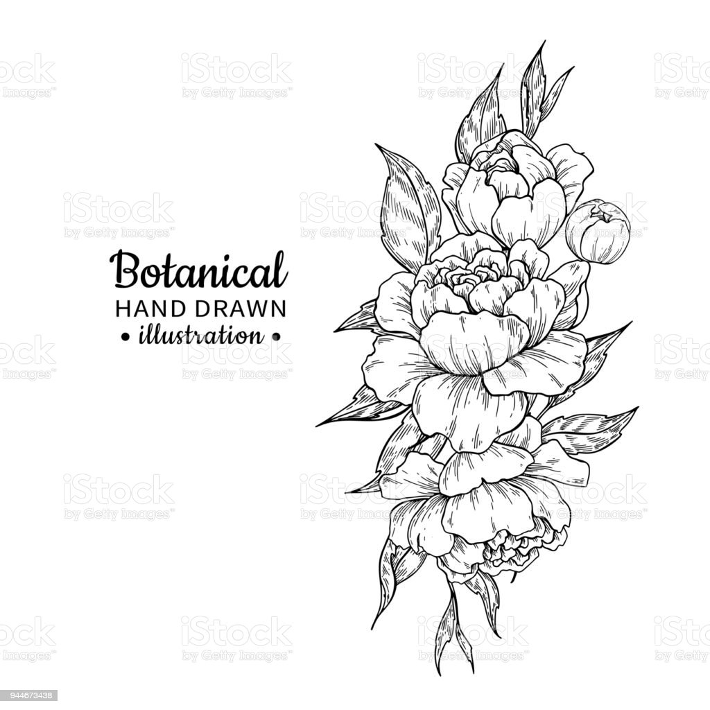 Vintage Flower Bouquet Vector Drawing Peony Rose Leaves And Stock ...