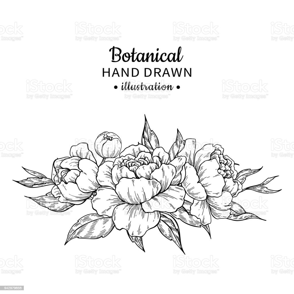 Vintage flower bouquet vector drawing peony rose stock vector art vintage flower bouquet vector drawing peony rose royalty free vintage flower bouquet izmirmasajfo