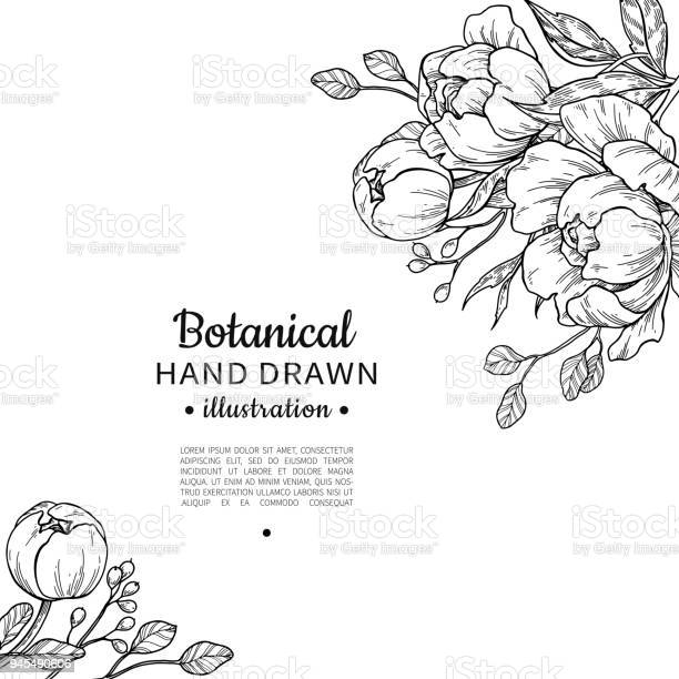 Vintage flower vector frame drawing peony rose leaves and ber vector id945490606?b=1&k=6&m=945490606&s=612x612&h=7wxou6phd2lcjmutqfemii8ptg7zzmk6i8ypsm2hnds=