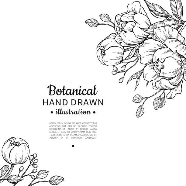 stockillustraties, clipart, cartoons en iconen met vintage bloem vector frame tekenen. pioenroos, roos, bladeren en ber - floral line