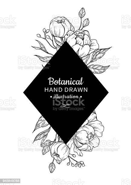 Vintage flower vector frame drawing peony rose leaves and ber vector id945849288?b=1&k=6&m=945849288&s=612x612&h=9obk r0xqpm1qm b493irnrcbqsxdtigie jxsc6ba8=