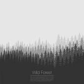 Vintage forest design template. Vector. Coniferous forest silhouette template. Woods illustration.