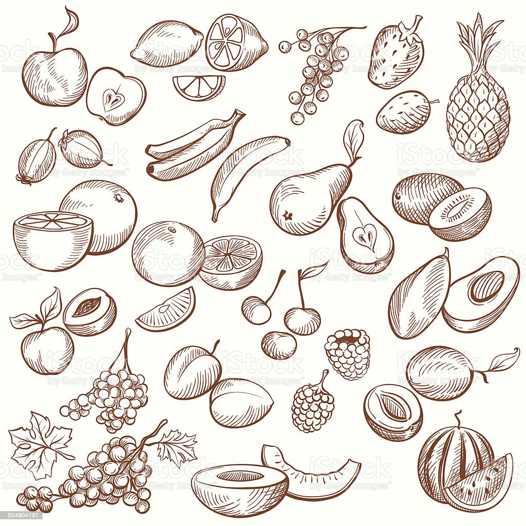 Vintage Fruit Contours vector art illustration
