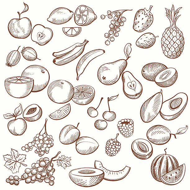 Vintage Fruit Contours Set of vintage sketches fruits, freehand hatching work. banana drawings stock illustrations
