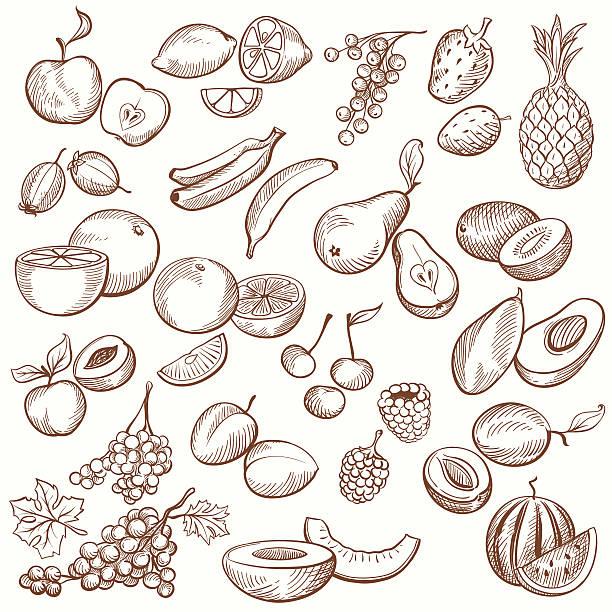 Vintage Fruit Contours Set of vintage sketches fruits, freehand hatching work. fruit drawings stock illustrations