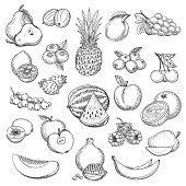 Vintage fruit sketch
