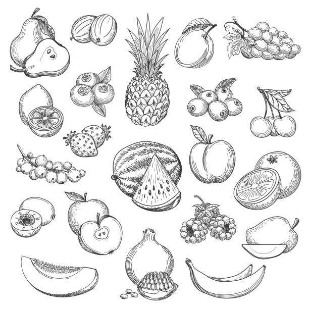 Vintage fruit sketch Vintage fruit sketch. Hand drawn fruits icon set, fresh pear and orange, strawberries and pineapple drawing sketch retro vector fruit stock illustrations