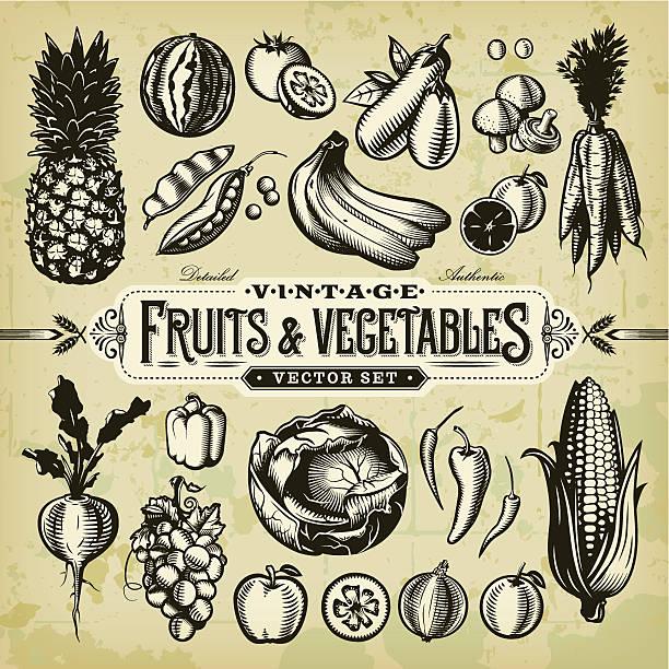 ilustrações, clipart, desenhos animados e ícones de vintage & conjunto de frutas e legumes - corn farm
