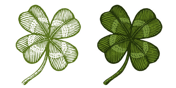 vintage green lucky clovers - four seasons stock illustrations