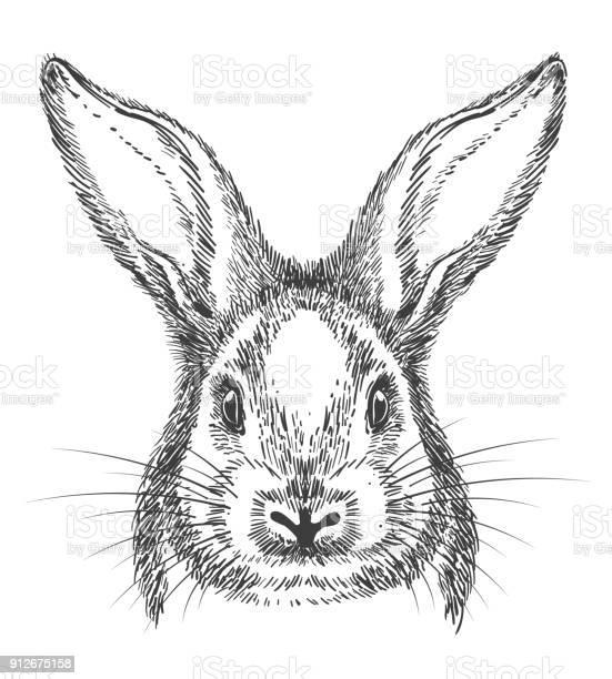 Vintage hand drawn bunny face sketch vector id912675158?b=1&k=6&m=912675158&s=612x612&h=rym nwkgihxutonvt4gnnctpfo7jvv8kysqp ahlg4i=