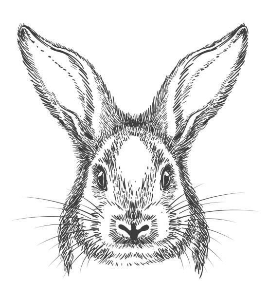 vintage hand gezeichnete hase gesicht skizze - kaninchen stock-grafiken, -clipart, -cartoons und -symbole