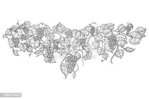istock Vintage hand drawn grape branch isolated on white 1280734442